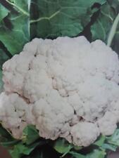 COLIFLOR BOLA DE NIEVE precoz   300 semillas