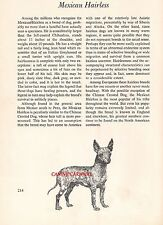 Mexican Hairless Chihuahua 1950 Dog Breed Art And Breed Description Paul Brown