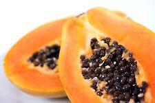 Carica Papaya''Asimina triloba''  10-Seeds*Outdoor Tree seeds*UK Seller*
