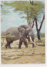 CPSM AFRIQUE AFRICA FAUNE AFRICAINE AFRICAN FAUNA Eléphant