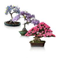 Flowering Bonsai Tree Seeds Bundle #1 - 3 Types, All Flowering Tree Seeds