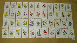 VINTAGE PEPYS WILD FLOWERS SEVENS CARD GAME c1960 FULL SET OF 44 CARDS NO BOX