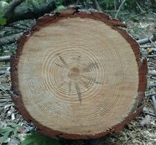 "5 cuts round 9 IN"" Pine Tree Log Slice Rustic Wedding Log Cabin picture Plaque"