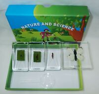 Cabbage White Butterfly Life Cycle Box Set 4 Block Education Specimen SS4LC1