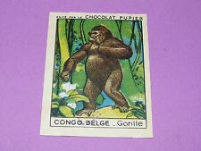 CHROMO CONGO BELGE N°237 GORILLE CHOCOLAT PUPIER AFRIQUE 1938-1950