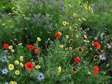 Insektennektar Blumenmischung Blumenmix Samen Saatgut Saat Profiqualität Bienen