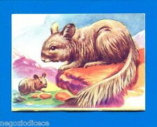 ANIMALI - Lampo 1964 - Figurina-Sticker n. 123 - CINCILLA' -New