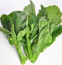 Oriental vegetale – cinese Gai LAN - 200 Semi