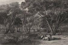 """Mallee Scrub, River Murray"", by BOOTH/CHEVALIER. Victoria, Australia c1874"