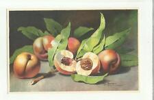 137913 stupenda cartolina artistica frutta di s. bonelli