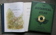 1883 -  Botanical Atlas -  fine coloured plates - lovely copy