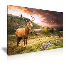 Animal DEER Stag MONTAGNA a muro ART PICTURE PRINT 76cmx50cm