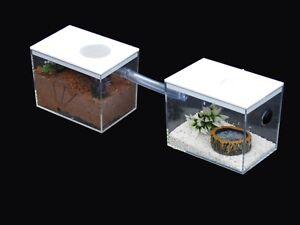 Nano Ant Housing,Ant Farms With Arena (No Decor Inc)