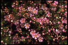 421059 Wax Flower A4 Photo Texture Print