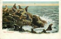 UDB Postcard CA Da589 Seals on Seal Rock San Francisco Charles Weider Germany