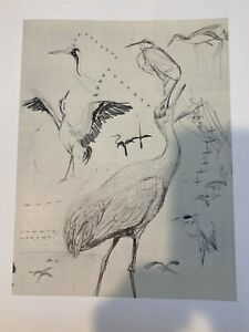"Louis Agassiz Fuertes & The Singular Beauty of Birds, ""Sandhill Crane"" Print"