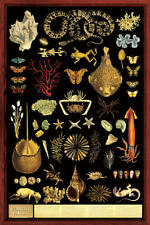 Curiosity Cabinet Laminated Educational Science Teacher Chart Print Poster 24x36