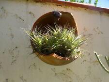 lot plantes aériennes  épiphytes , 9à 12ramifications +-aéoniums boutures tiges