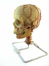 1950'S Medical Science Anatomical Skull On Stand.