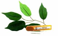 Pilot Pencil Leads Eno 0.5mm 2b B HB H 2h Mechanical Pencil Lead Refills Black 2h 3