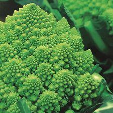 Kings Seeds-Broccoli-Romanesco - 500 semi