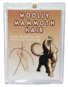 WOOLLY MAMMOTH Genuine Hair w/ COA PLEISTOCENE for Fossil Collectors #10187 5o