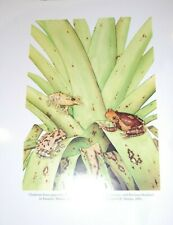 New listing Set of 46! Stunning color plates Duellman Hylid tree frogs herpetology amphibian