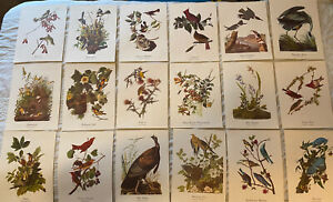 18 Best Loved Bird Paintings by Audubon Full Color Prints Set Complete