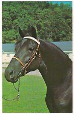 ORCLAND BOLD FOX Morgan Black Stallion Horse Randolph Vermont Postcard VT KOPPEL
