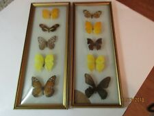 """Vintage Real Butterfly Framed Pictures Taxidermy 14"""" by 6"""" Bowed Glass"""