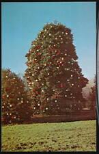 JACKSON MD B&O RR Railroad Xmas Holly Tree Cecil County