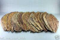 15pcs ketapang catappa indian almond leaves for shrimp betta cichlid
