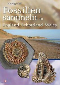 Fossilien sammeln in England - Schottland - Wales   Herwig Wulf   Taschenbuch