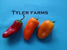 15+ Mini Sweet Red, Orange, Yellow Organic Mixed Pepper seeds (chili, chile)