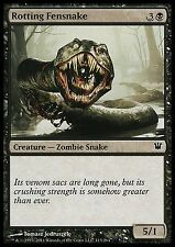 Rotting Fensnake X4 EX/NM Innistrad MTG Magic Cards Black Common