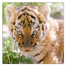 Kühlschrank - Magnet: Tiger - Baby