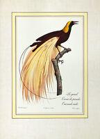 Jacques Barraband Le Grand Oiseau de Paradis Emeraude Poster Kunstdruck Bild