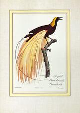 Jacques barraband le grand oiseau de Paradis Emeraude póster son impresiones artísticas imagen
