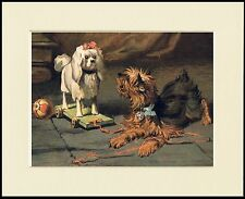 YORKSHIRE TERRIER AND TOY POODLE LOVELY DOG PRINT MOUNTED READY TO FRAME