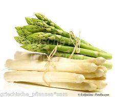 Spargel verde y Blanco 40 semillas exquisitez SANA CULTURA PARA 10-20 AÑOS