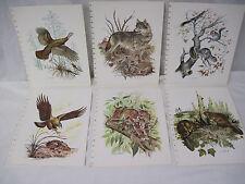Antique Nature Prints Artist James Lockhart Turkey Wolf Squirrel & more      mz