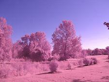 price of 2 Infrared Cameras Travelbon.us