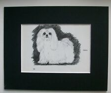 Maltese Terrier Dog Print Gladys Emerson Cook Bookplate 1962 8x10 Matted