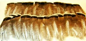 """22~ Light BROWN to Dark BROWN TURKEY FEATHERS ~ With BLACK & WHITE TIPS 5 1/2"""" L"""