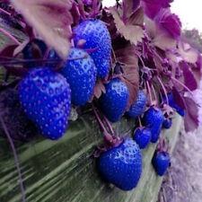 500pcs Blue Strawberry Semi rari frutta verdura bonsai Commestibili giardino Arrampicata