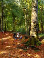 Huge Oil Peder Mørk Mønsted - The Woodland Glade young girls in landscape canvas