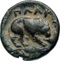 PLAKIA in MYSIA 350BC Cybele Lion Genuine Authentic Ancient Greek Coin i46655