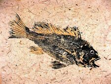 Black Sea Bass GYOTAKU Fish Rubbing 8.5 X 11 Best Sea art print by Barry Singer