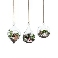 Home Decor Glass Hanging Vase Air Planter 3PC Terrarium Flower Succulent Moss