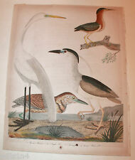 Antique print Amer. Orinthology A. Wilson/J Warnicke 1829 Great White Heron